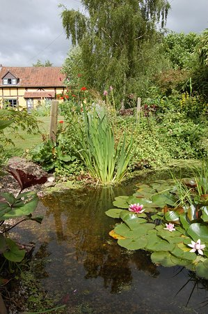 View of cottages from our wildlife pond