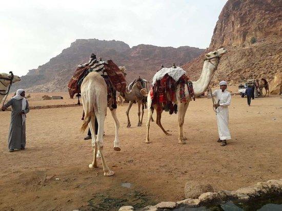 Mars Camp Wadi Rum