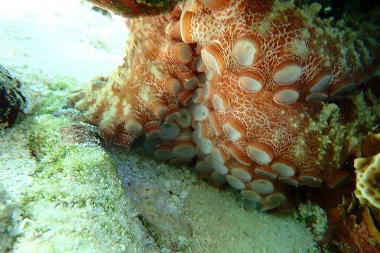 Aruba Outdoor Adventures: Octopus