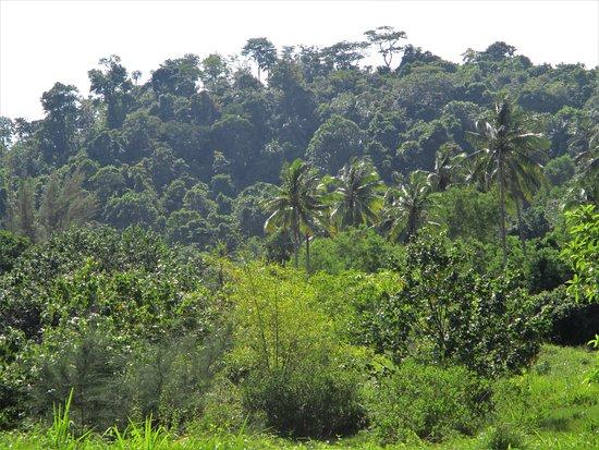 Sirinat National Park: Belle vegetation