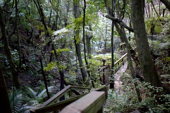 Great Barrier Island, New Zealand: The Glenfern Sanctuary Loop Track