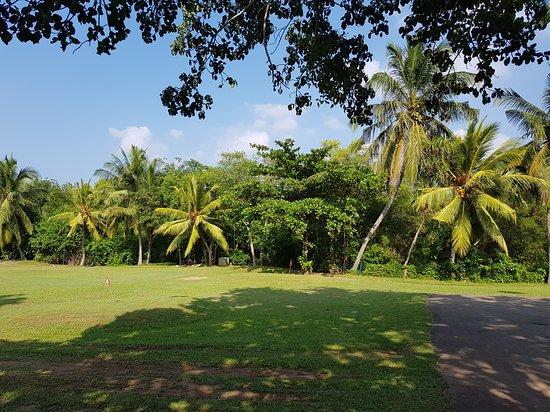 Mini golf course next to the pool area.