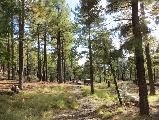 Pictures of Spencer Canyon Campground - Mount Lemmon Photos