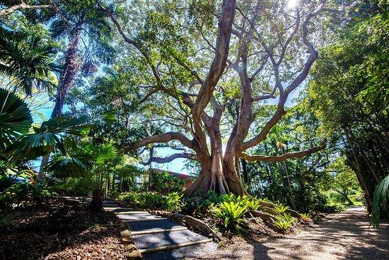 Entrance gardens – Bild von The Figs Byron, Brunswick Heads - Tripadvisor