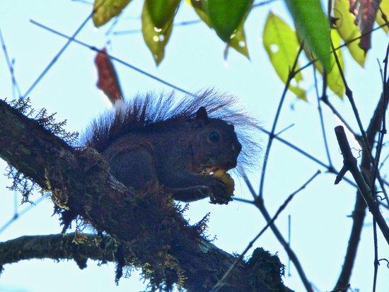 wildlife at Naguala -squirrel enjoying local cuisine