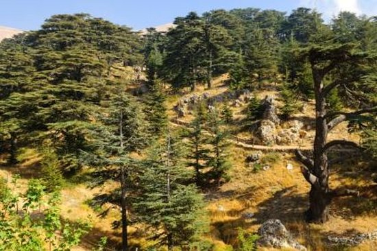 Cedars of Lebanon, Qozhaya, and...