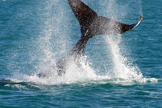Whale-Watching Cruise and Hillarys...