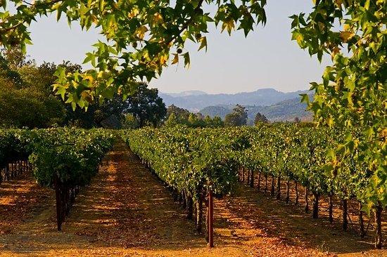 Visite privée: dégustation de vins à...