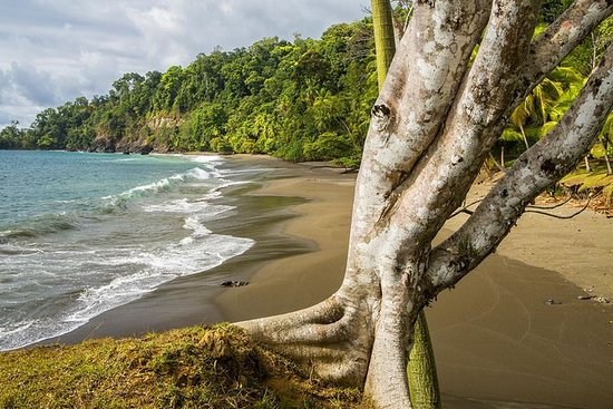 8-dagars Costa Rica Natural Wonders ...