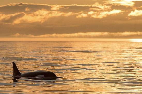 Victoria Wine and Whales Combo Tour