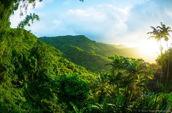 Small-Group El Yunque Rainforest Day...