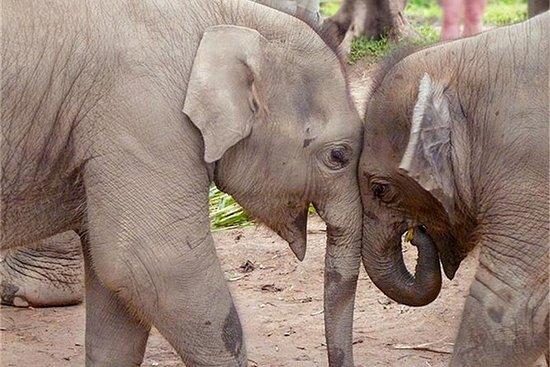 Full Day Elephant Nature Park...