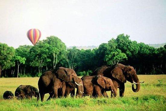 在肯尼亚 - 纳库鲁湖马赛马拉的4天Enthralling Safaris