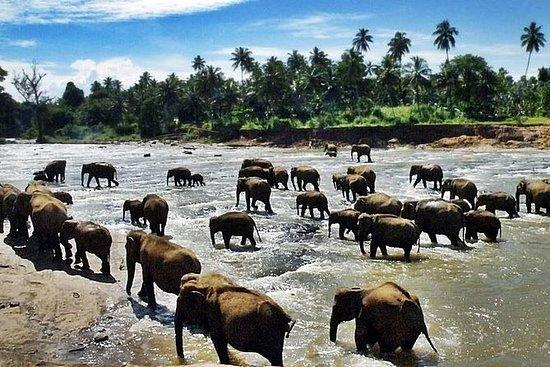 Sri Lanka på en shoestring per to...