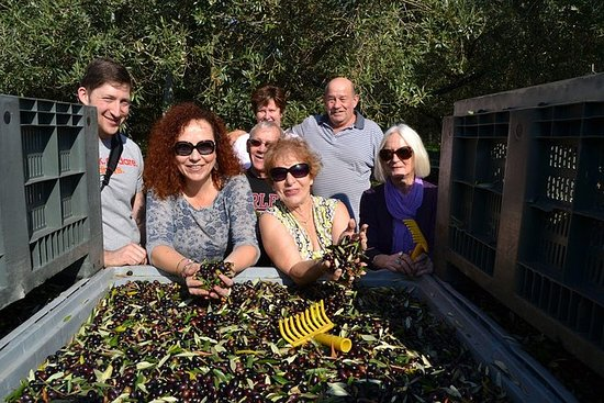 為期7天的阿布魯佐烹飪之旅:烹飪班品嚐葡萄酒和橄欖收穫