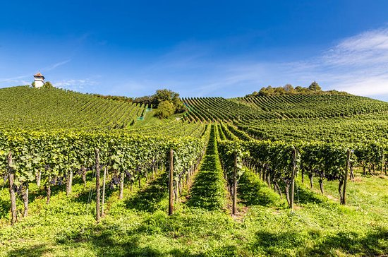 Tour del vino del valle del Loira...