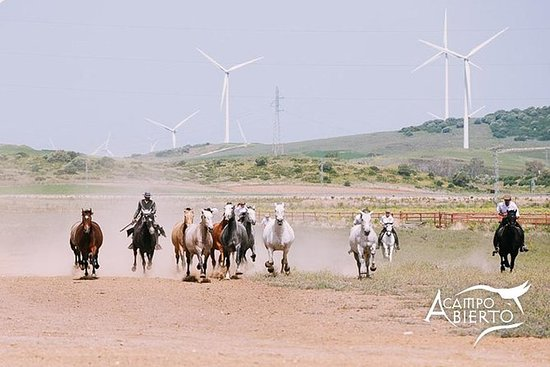CAMPO ABIERTO自由参观Alvaro Domecq马和勇敢的公牛