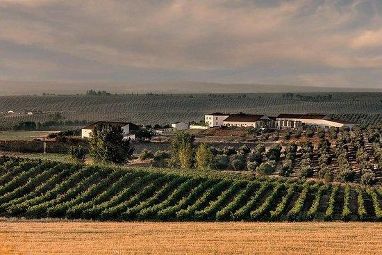 Alentejo Wine Tour from the Algarve
