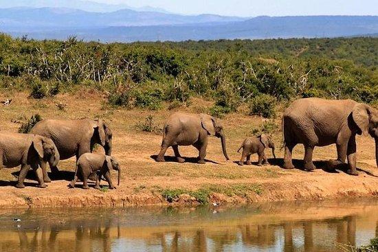 4 dager dyreliv safari i Uganda