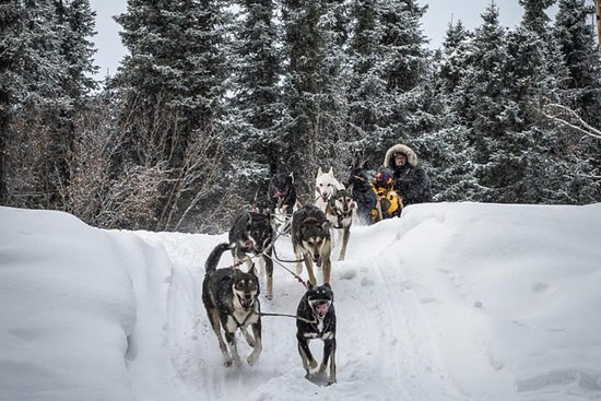 4 horas Dog Sledding e Kennel Tour...