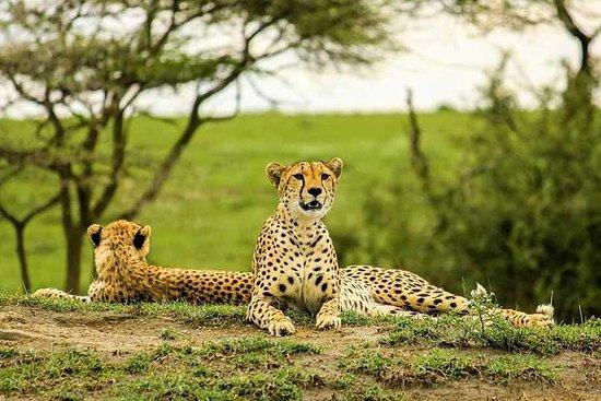 7 días Tanzania privado de lujo...