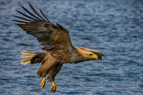 Bote RIB Eagle de White-Tail Safari...