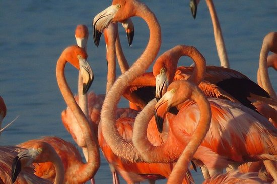 Flamingos Tour