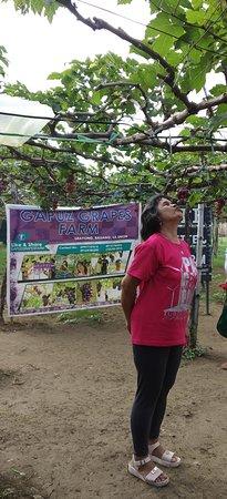 Gapuz Grapes Farm صورة فوتوغرافية
