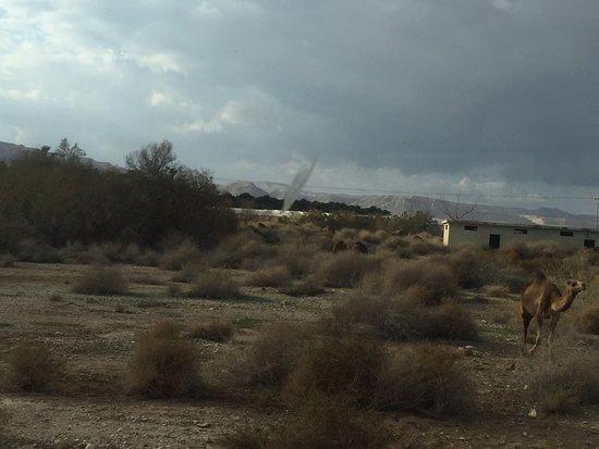 Jordan Valley, อิสราเอล: Иорданская долина
