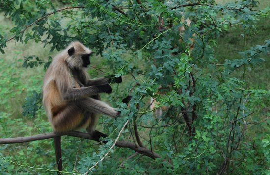 Ranthambore Tiger Reserve 사진