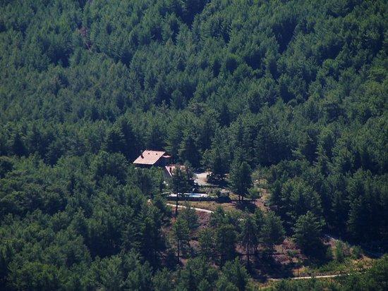 Yesiluzumlu, Turkey: in forest
