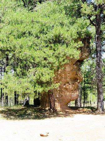 Valdecabras, Spania: La cara del hombre, la faccia dell'uomo, con una  letterale chioma rigogliosa, una delle numerose formazioni straordinarie del Parco della Ciudad Encantada.