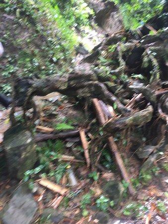 Argyle Waterfall pathway to falls