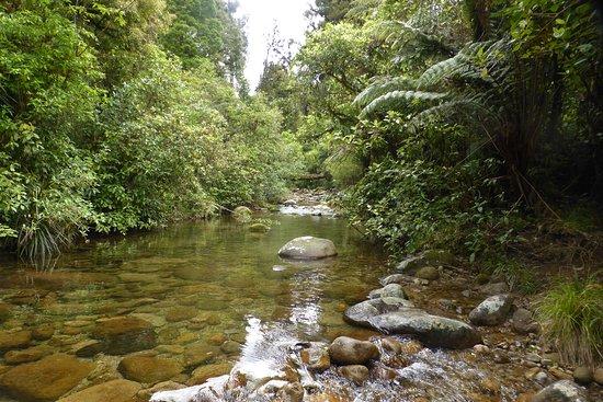 Rapurapu Kauri Track