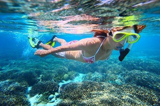 背风海岸海豚和浮潜半日游