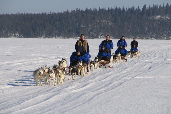 Lapland Thrill of Speed: Husky Safari...