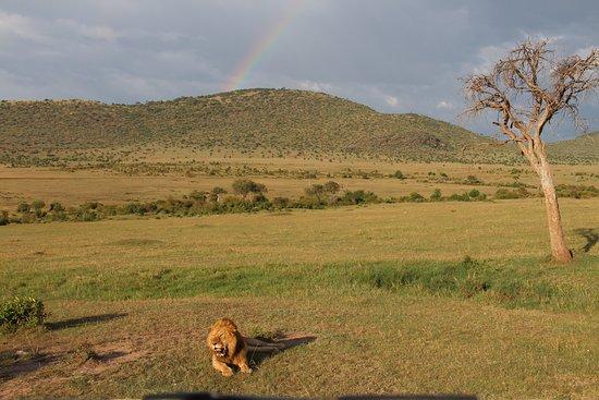 African Comfort Zone Safaris: Evening Gamedrive Maasai Mara