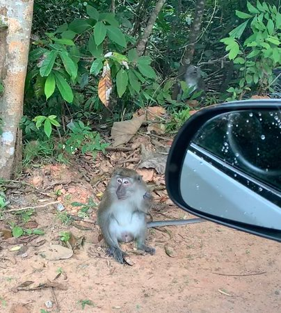 A monkey on the side of the road