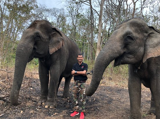 Welcome to elephant sanctuary in Mondulkiri Province , Cambodia. We highly recommend this amazing elephant tour. You can meet and greet them without distance, get lectures from local trekking tour guide and make your knowledge about environmental issues deeper. This tour must be a great chance for you to have a special unforgettable experience ever