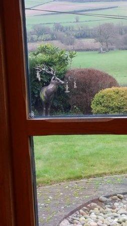 Greenham, UK: Rudolf and rolling countryside