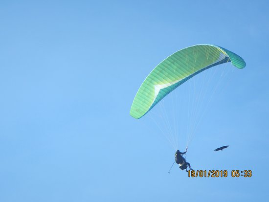 Algodonales, Spania: Paragliding with Baldrick, the American vulture