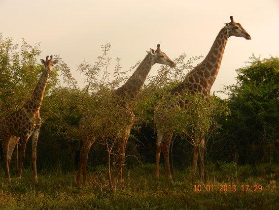 Marloth Park 사진