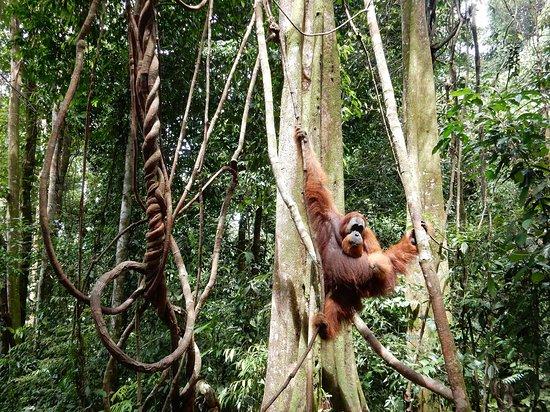 Discover Sumatra