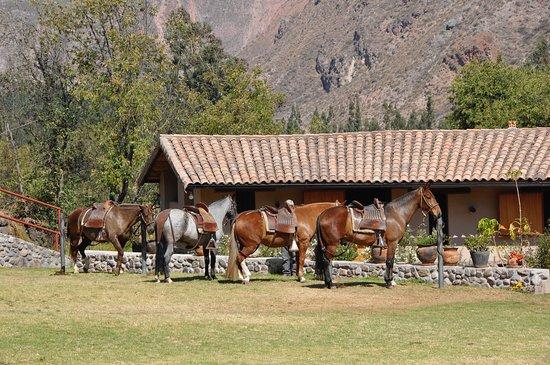 Urubamba, Peru: Horses at the Perol Chico ranch