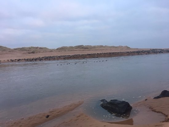 Newburgh, UK: There was a  huge number of seals.