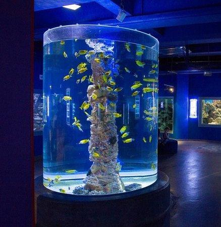 Картинки по запросу питер океанариум