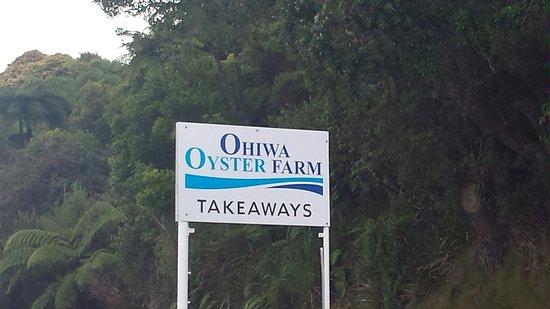 Bilde fra Ohope