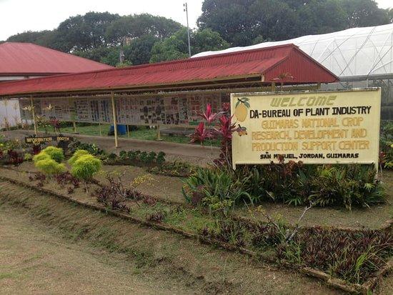 Guimaras Island, Filippinerna: Sign