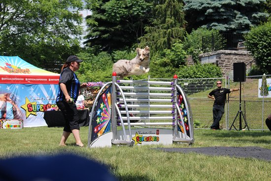 Port Credit Memorial Park - Mississauga Waterfront Festival - SuperDogs show (June 2018)