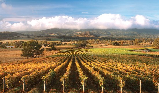 Woodend, Australië: Beauty in the vines.